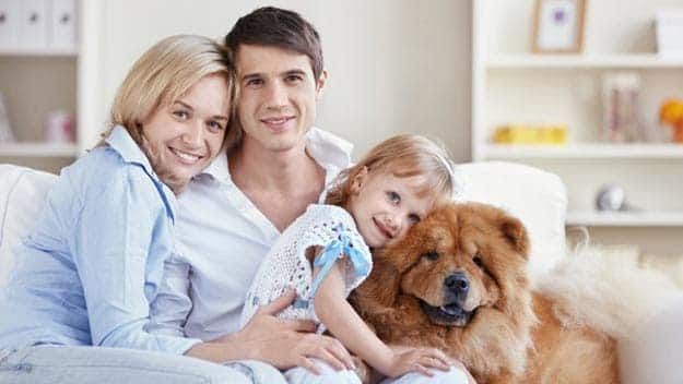 Wills & Trusts dog-young-family Direct Wills Groby